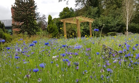 Our evergreen relationship with the National Garden Scheme